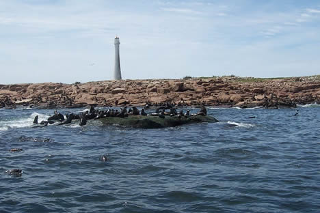 Sea lions on Isla de Lobos
